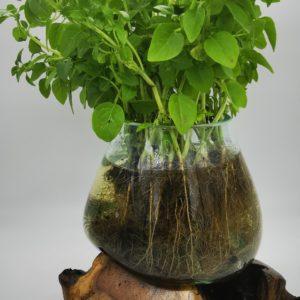 Vase artisanal sur racine teck en verre soufflé et sels de bains «Fait main à Bali»